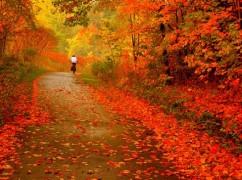 autumn-ride