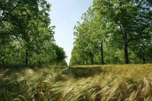 stephane-le-foll-peaufine-son-plan-agroecologie