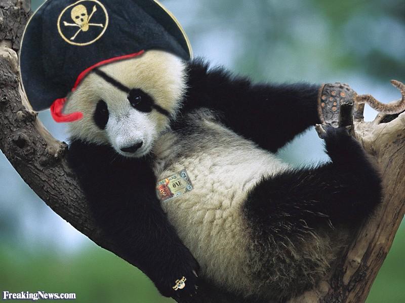 Pirate-Panda--47328